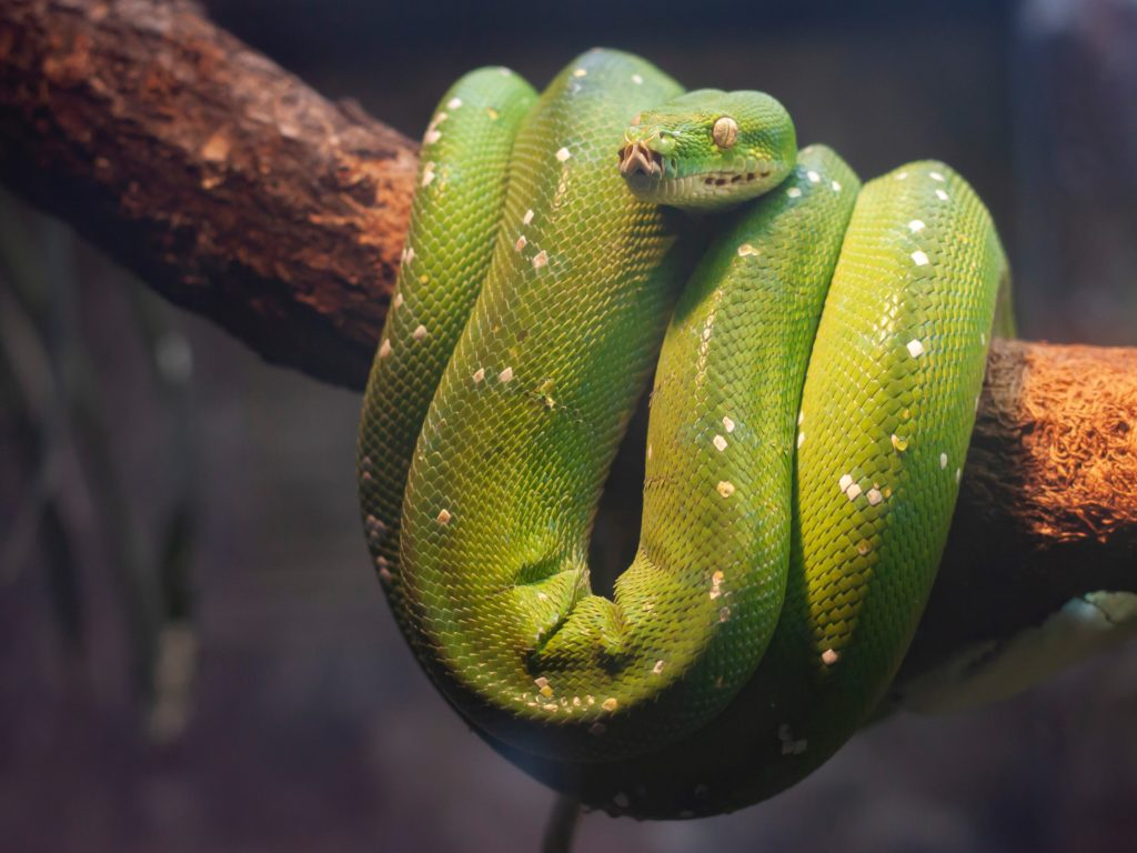 Green snake wrapped around a branch symbolizing evil