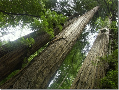 Redwood Time and the Kingdom of God