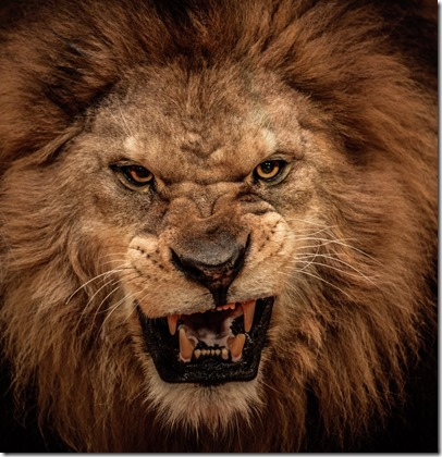 Beware of the Lions of Tribalism