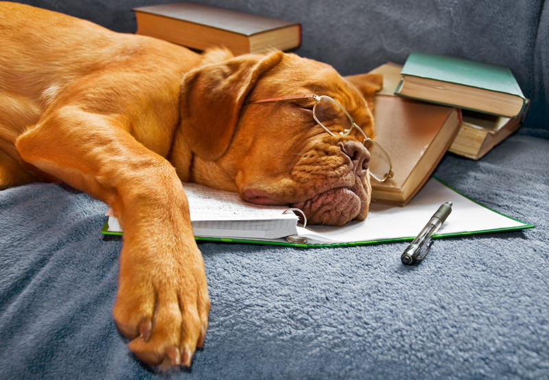 Dog with spectacles sleeping on book, illustrating that wisdom is not gained through books